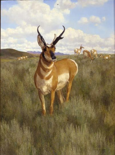 Wyoming Spring - 1978 - Oil On Panel - 25 x 18 1/2 - Appeared in Game Animals of North America by Dalrymple
