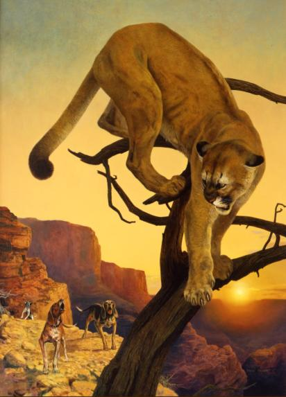 "Mountain Lion - 1959 - Oil On Panel - 25 x 17 - ""Big Game Animals of North America"" by Jack O'Connor"