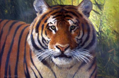 Bengal Tiger - 1973 - Oil On Board - 7 x 8 1/4