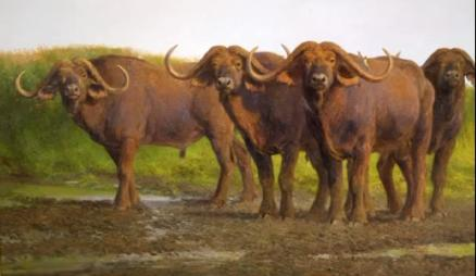 African Cape Buffalo - 1995 - Oil On Canvas - 30 x 50